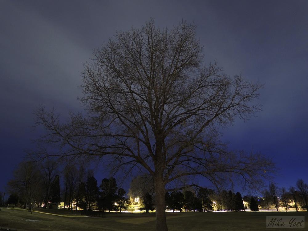 Tree Reaching_wm