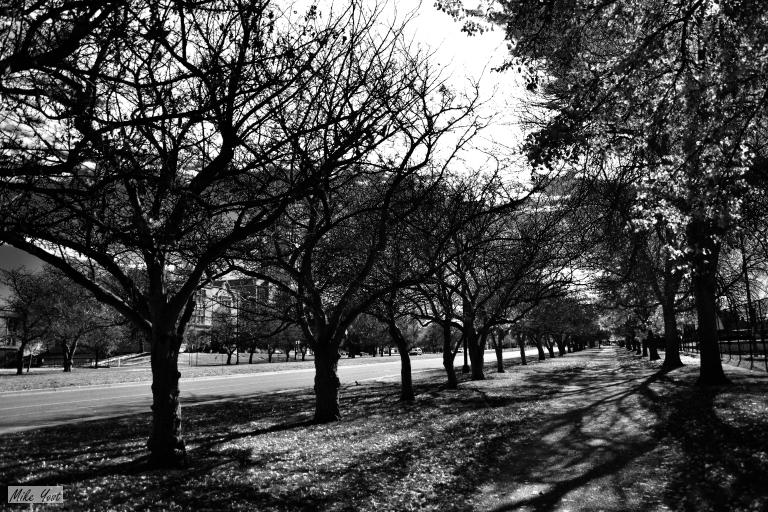 path-of-shadows